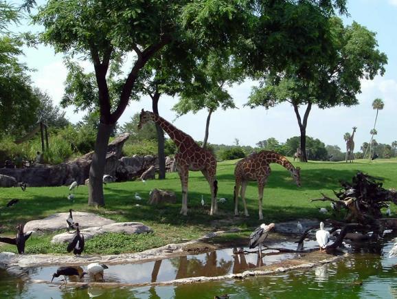 Busch Gardens Serengeti Safari Tickets Orlando Ticket Deals
