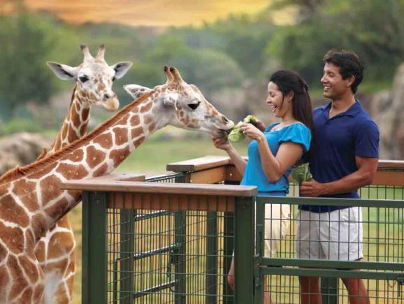 Safari Tour Florida