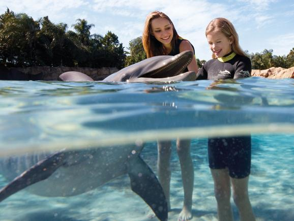 Discovery Cove Ultimate Package With Free Parking Orlando Ticket Deals
