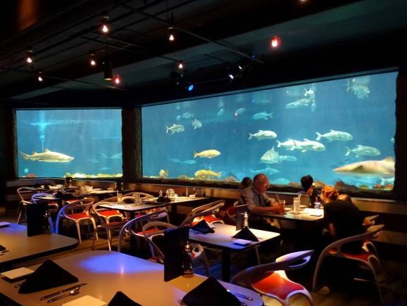 Private VIP Tour at SeaWorld