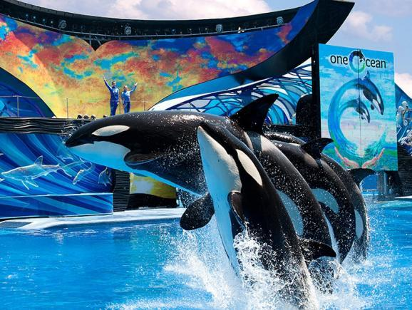 SeaWorld Signature Show Seating Ticket