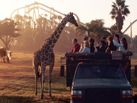 Serengeti Safari at Busch Gardens
