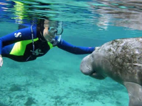 Swim With Manatees Florida Adventure Tour Orlando