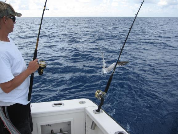 Go gulf coast deep sea fishing tickets orlando ticket deals for Mexican gulf fishing company