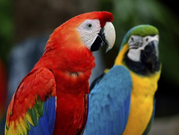 Wild About Florida - Macaws