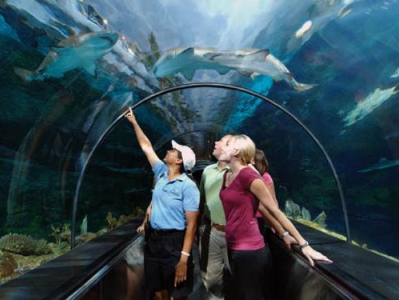 Seaworld Parks Entertainment Orlando Ticket Deals