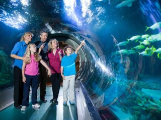 Madame Tussauds Orlando & SEA LIFE Ticket
