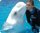Beluga Interaction Programme at SeaWorld Orlando
