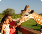 Busch Gardens Serengeti Safari Tickets