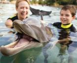 Discovery Cove Ultimate Package with Dolphin Swim