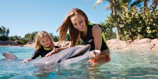 Top 10 Animal Encounters in Orlando