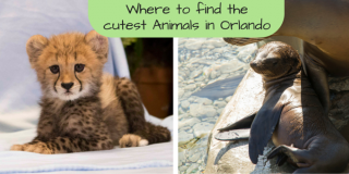 Cutest animals in Orlando